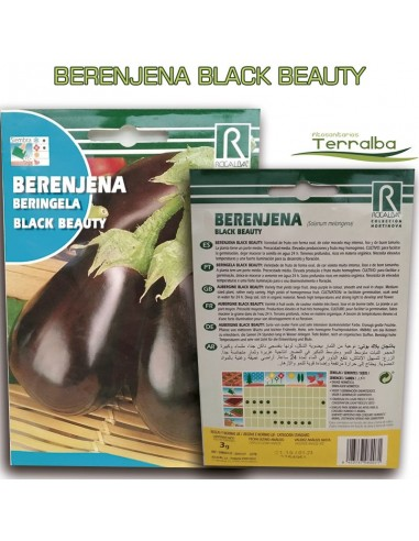 SEMILLAS BERENJENA BLACK BEAUTY