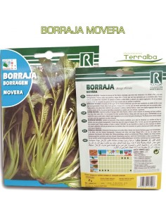 SEMILLAS BORRAJA MOVERA