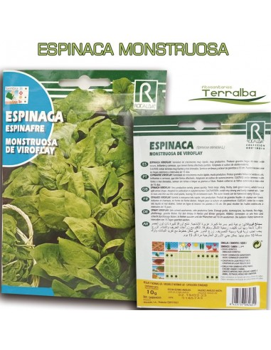 SEMILLAS ESPINACA MONSTRUOSA DE VIROFLAY
